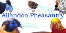 Allandoo Pheasantry banner with birds